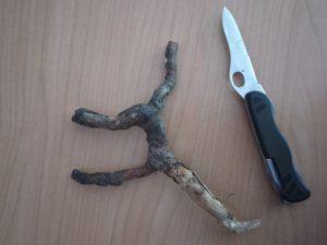 MIt der großen Klinge vom Taschenmesser schnitzen die Kinder das Wurzelholz. foto (c) kinderoutdoor.de