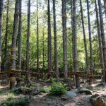Nachhaltig und abenteuerlich: Alles Wissenswerte zum Thema Holz