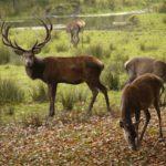 Wandern mit Kindern: Die Hirschbrunft im Herbst erleben