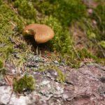 Pilze sammeln mit Kindern: Ab ins Körbchen!