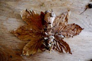 Basteln Herbst Naturmaterialien Kinderoutdoor Outdoor Erlebnisse