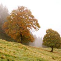 Wandern mit der Familie im herbstlichen Tirol: Im Pfundser Tschey leuchten die Bäume mit ihren bunten Blättern. Von Hier aus geht es zur Platzalm hinauf.   foto (c) kinderoutdoro.de
