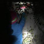 Schnitzeljagd in der Nacht: Bei der Mondschein auf Schatzsuche mit den Kindern