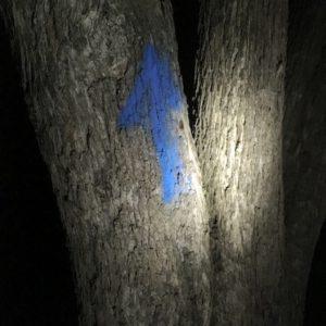 Schnitzeljagd Nachts: Hier heißt es Augen auf und Stirnlampen an um die Wegpfeile zu finden. foto (c) kinderoutdoor.de