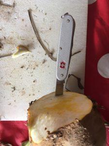 Mit dem Taschenmesser schneiden die Kinder einen Rand in die Futterrübe. foto (c) kinderoutdoor.de