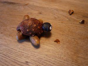 Beim Basteln mit der Kastanie bringen wir noch den Kopf der Schildkröte an. foto (c) kinderoutdoor.de