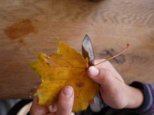 Basteln im Herbst: Die Kinder schneiden mit dem Taschenmesser die Stiele der Ahornblätter ab.  foto (c) kinderoutdoor.de