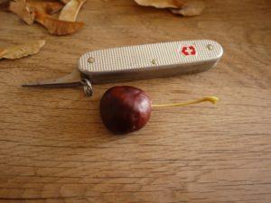 Basteln im Herbst mit Kastanien: Steckt einen der drei Stiele in das gebohrte Loch an der Rückseite der Kastanie.  foto (c) kinderoutdoor.de