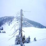 Skioturen mit Kindern: Der Hagan Skyforce im Test