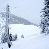 Mit Kindern auf Skitour. Das Hintere Hörnle ist ideal für Einsteiger.   foto (c) kinderoutdoor.de