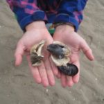 Ausflugsziel mit Kindern im Norden: Matsch and Moor