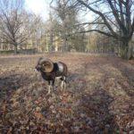 Ausflugsziele für Familien: Wildgehege mit Hirschen, Rehen und Wildschweinen