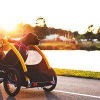 Burley Tail Wagon und der Liebling der Familie ist beim Radlausflug mit dabei.   Photocredit_Instagram@maeelizabethg
