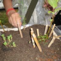 Die Kinder mit großen Eifer dabei und pflanzen fleißig.  foto (c) kinderoutdoor.de