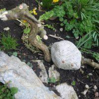 Ab mit den Drachen ins Beet und dort haben Wühlmäuse oder Schnecken sicher Angst vor ihm.   foto (c) kinderoutdoor.de