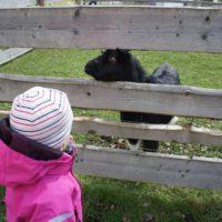 Zum Freilichtmuseum gehören auch Tiere wie Ziegen, Schafe oder Bienen. Diese streichelt Ihr besser nicht.   foto (c) kinderoutdoor.de