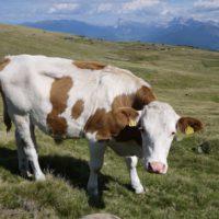 Manche Almen in Südtirol lassen sich auch mit dem Kinderwagen erreichen. Wenn die Bedingungen und die Kondition entsprechend ist.   foto (c) kinderoutdoor.de