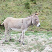 Hier stehe ich und kann nicht anders. Der Esel ist beleidigt! Nach 15 Minuten wanderte er wieder mit.   foto (c) kinderoutdoor.de