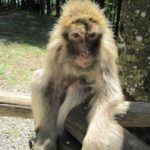 Wandern mit Kindern: Zu den Affen vom Bodensee