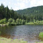 Familienwanderung zum Sankenbachsee bei Baiersbronn: Auf den Spuren von Wilhelm Hauff