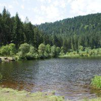 Dunkel ist das Wasser vom Sankenbachsee und es erfrischt an heißen Sommertagen.   foto (c) kinderoutdoor.de