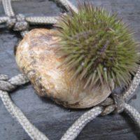 Interessantes holen die Schleppnetze der Fischerboote vom Meeresboden.   foto (c) kinderoutdoor.de