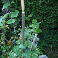 Fertig ist unser Rankstock und die Tomaten wachsen daran hoch.  foto (c) kinderoutdoor.de