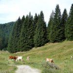 Berghütte für Familien: Die Schönfeldhütte beim Spitzingsee