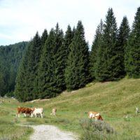 Gemütlich steigt die Familie zur Berghütte im Mangfallgebirge auf.   foto (c) kinderoutdoor.de