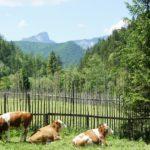 Familienwanderung: Auf den Spuren der Wilderer und Schmuggler in den bayerischen Alpen
