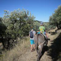 Eselwandern in der Provence bringt der Familie die wilden Seiten der franzöischen Urlaubsregion näher.   foto (c) kinderoutdoor.de