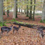 Ausflugstipps für Familien: Ausflugsziele im Herbst und Ihr habt es bunt