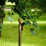 Wanderungen zu Eichhörnchen: Drei Familientouren im Herbst