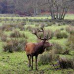 Tiere im Herbst beobachten: Wo Ihr Hirsche, Wildschweine und Co. zu sehen bekommt