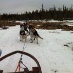 Hundeschlittentour mit Kindern: Lappland in Mitteleuropa erleben