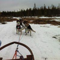 Hundeschlittentouren mit Kindern und Ihr fühlt Euch wie in Lappland oder Alaska.  foto (c) kinderoutdoor.de