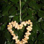 Vogelfutter Ring aus Erdnüssen selbst machen