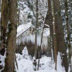 Schneeschuhwandern mit Kindern in Tirol: Auf leisen Sohlen durch die Berge