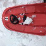 Bob Schlitten für Kinder im Test: Wie gut sind Alpengaudi, Big, Hamax und Wed´ze?