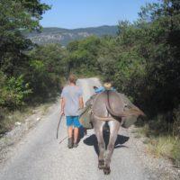 Eseltrekking entschleunigt die ganze Familie, denn der Esel gibt das Tempo vor.   foto (c) kinderoutdoor.de