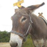 Kinder Outdoor Abenteuer: Wandern mit einem Esel und Kindern