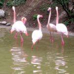 Ungewöhnliche Wanderungen für Kinder: Flamingos, Geysir und Unterwasserhöhle