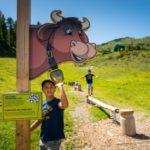 Familienurlaub am Zauchensee: Kuhparkuhr und vier Gipfel an einem Tag