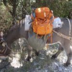 Rucksack richtig packen oder Ihr habt Rücken! Wir haben fünf Tipps für Euch!