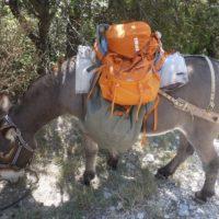 Den Rucksack richtig packen, das kann sogar ein Esel.  foto (c) kinderoutdoor.de