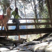 Im Frankenwald könnt Ihr das ganze Jahr mit den Lamas wandern.   foto (c) kinderoutdoor.de