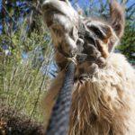Outdoor Ausflüge für Kinder: Segeln, Biken und wilde Tiere