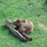 Kinder Outdoor Abenteuer im Bayerischen Wald: Bezahlbar für Familien