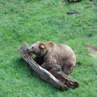 Im alternativen Bärenpark Worbis kommen die Kinder den Bären näher.   foto (c) kinderoutdoor.de