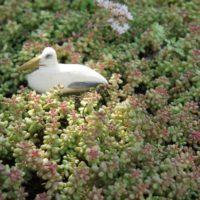 Fertig bemalt ist die Seemöwe ein Hingucker.   foto (c) kinderoutdoor.de